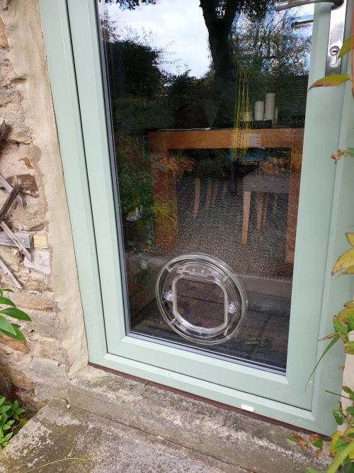cat flap in glass