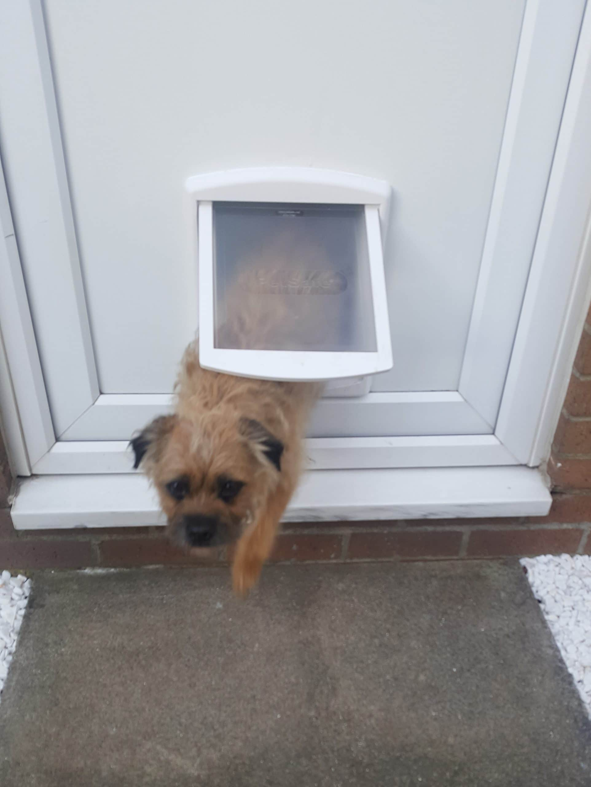 dog flap darlington
